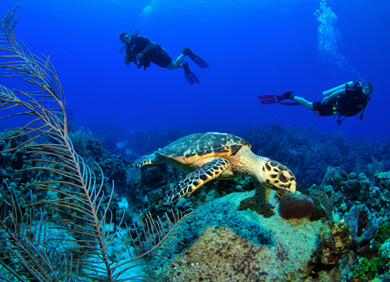 Visit some amazing Dive spots